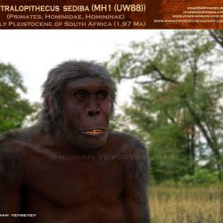 1142_australopithecus_roman_yevseyev
