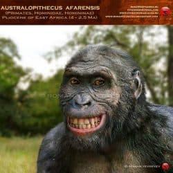 1143_australopithecus_roman_yevseyev
