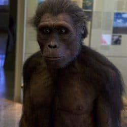 1144_australopithecus_marc_hermann