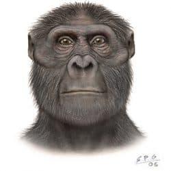 1145_australopithecus_sergio_perez