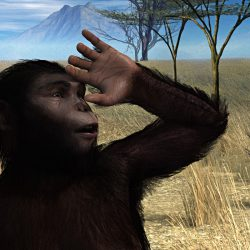 1146_australopithecus_scott_livingston