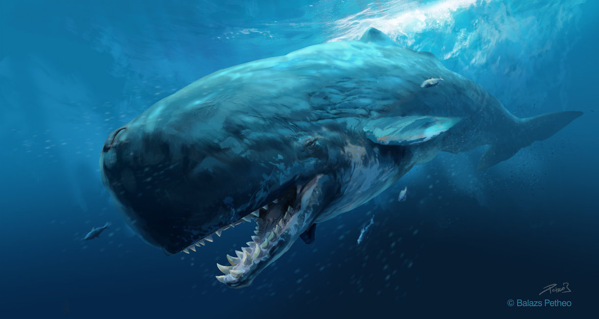 Leviathan livyatan facts and pictures - Dinosaure marin carnivore ...