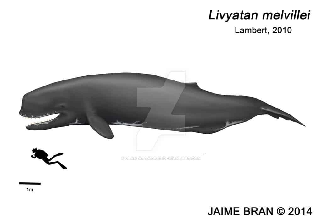 Leviathan (Livyatan) by Jaime Bran