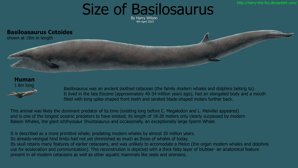 Basilosaurus by Harry Wilson