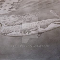 1165_basilosaurus_polihierax