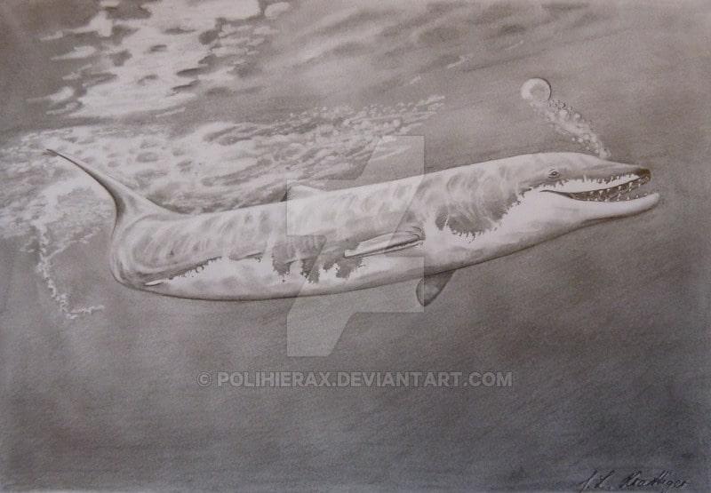 Basilosaurus by Polihierax