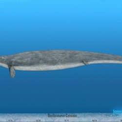 1166_basilosaurus_sameerprehistorica