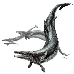 1167_basilosaurus_pavel