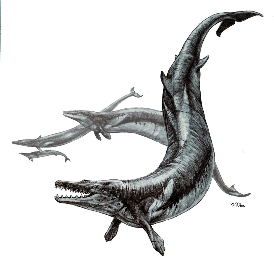 Basilosaurus by Pavel