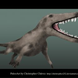 1176_ambulocetus_christopher