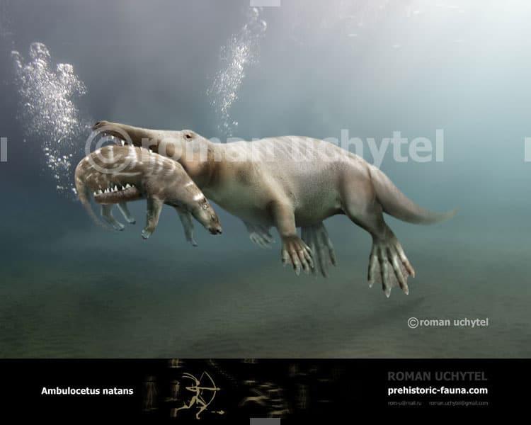Ambulocetus by Roman Uchytel