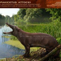 1179_pakicetus_roman_yevseyev