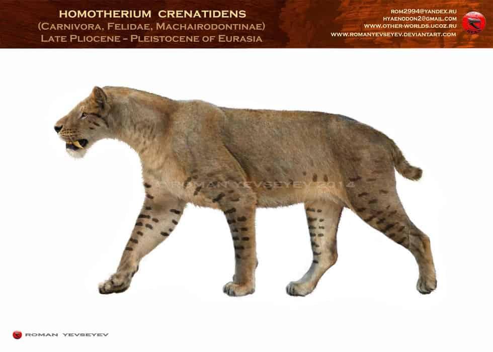 Homotherium by Roman Yevseyev