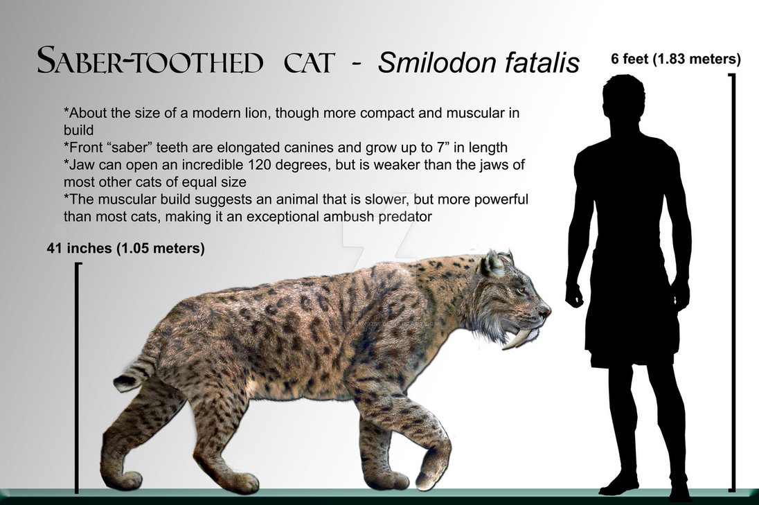Smilodon by Daniel Reed