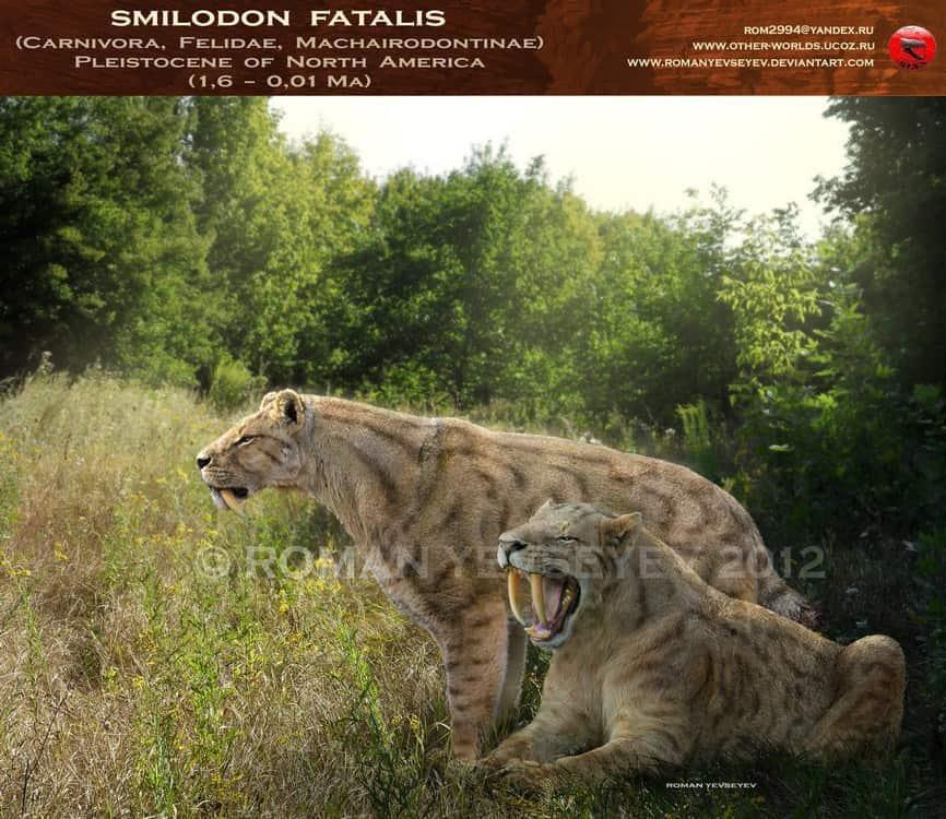 Smilodon by Roman Yevseyev