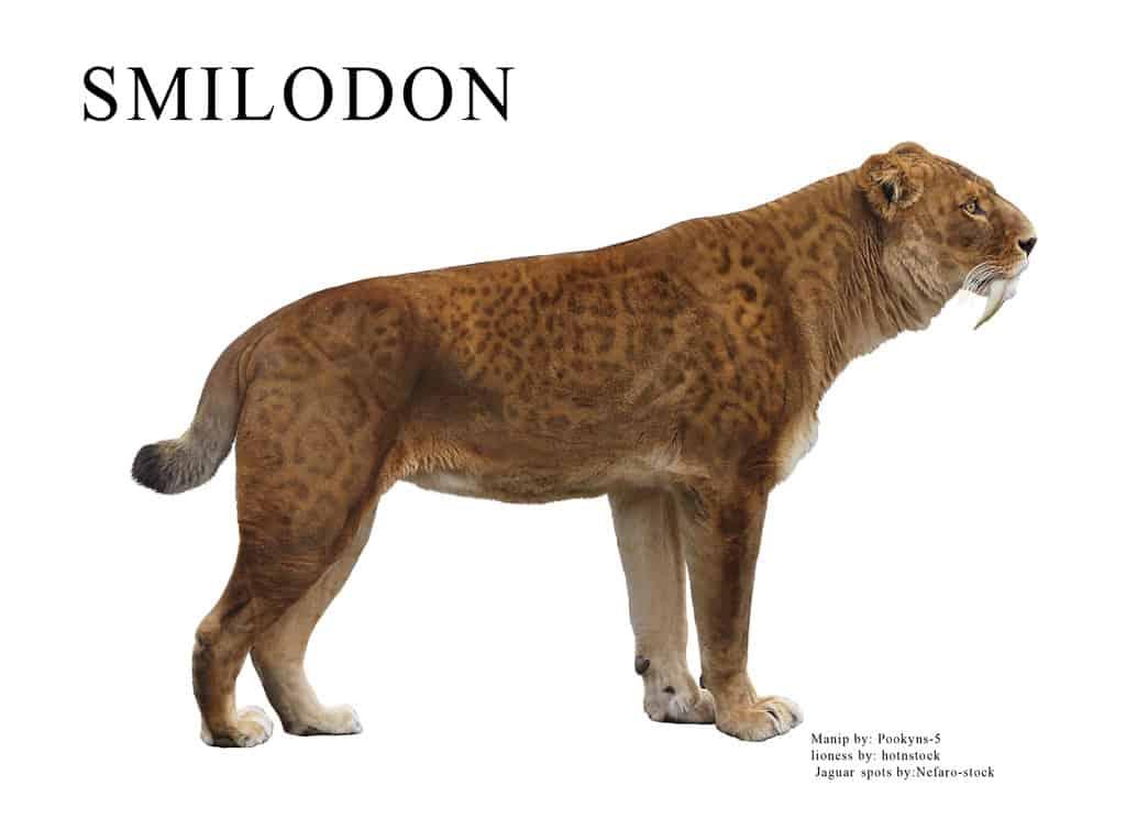 Smilodon by pookyhorse