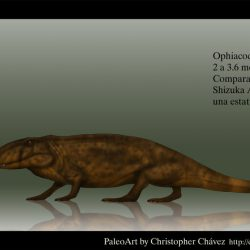 1291_ophiacodon_christopher