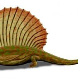 1315_edaphosaurus_nobu_tamura