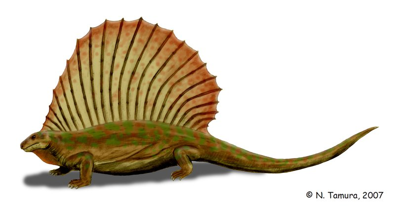 Edaphosaurus by Nobu Tamura