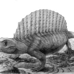 1319_edaphosaurus_vladimir_nikolov