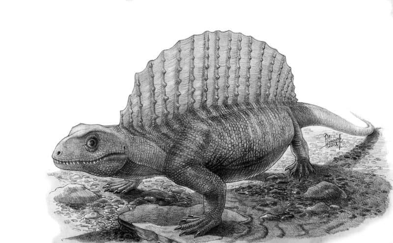 Edaphosaurus by Vladimir Nikolov