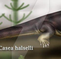 1322_casea_theropsida
