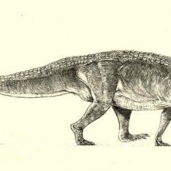 1338_postosuchus_jakub