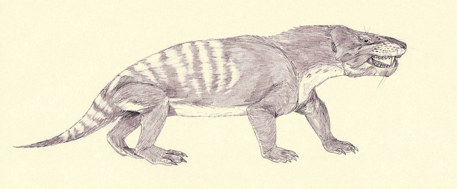 Cynognathus by Jakub