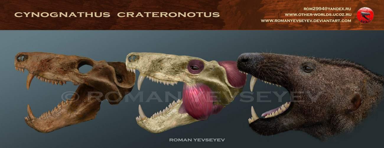 Cynognathus by Roman Yevseyev
