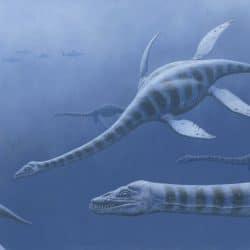 1362_plesiosaurus_esther_van_hulsen