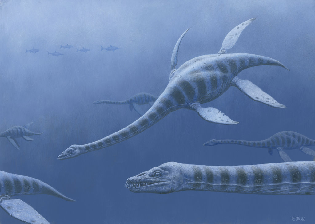 Plesiosaurus by Esther van Hulsen