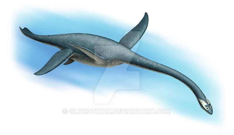 Plesiosaurus by Andrey Atuchin