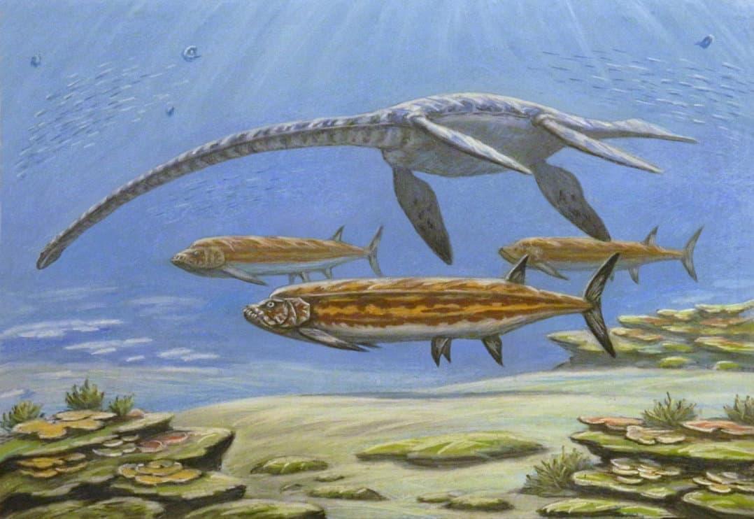 Styxosaurus by Andrej Belov