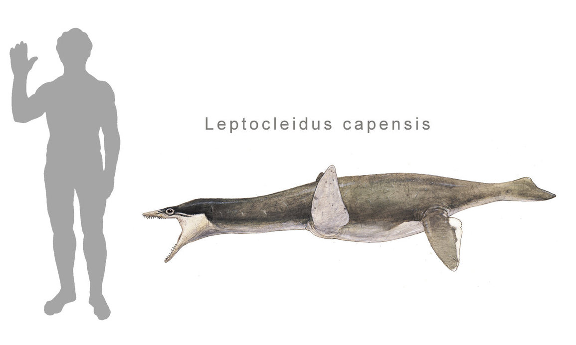 Leptocleidus by Joschua Knuppe