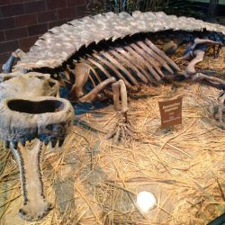 1413_sarcosuchus_max_thomas