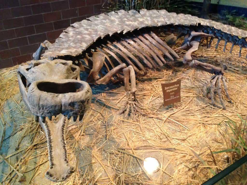 Sarcosuchus by Max Thomas