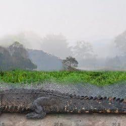 1417_deinosuchus_sameerprehistorica