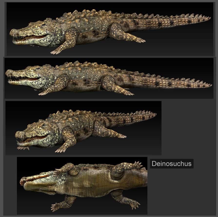 895 x 892 jpeg 174kBPurussaurus