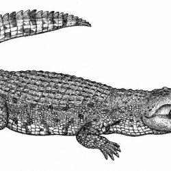 1422_deinosuchus_alexey_katz