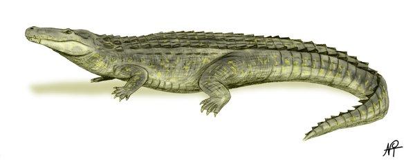 Purussaurus by Nobu Tamura