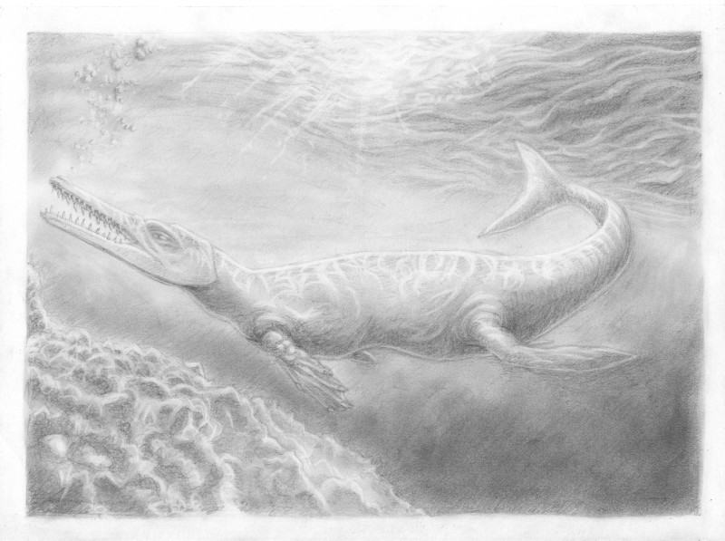 Metriorhynchus by draw