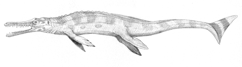 Metriorhynchus by Martin Chavez