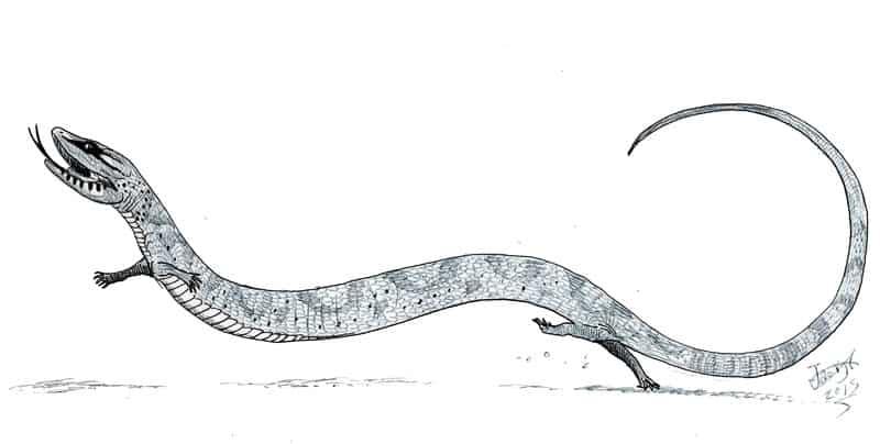 Tetrapodophis by HodariNundu
