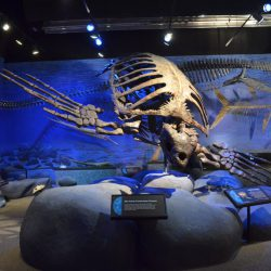 1472_archelon_nick_froyd