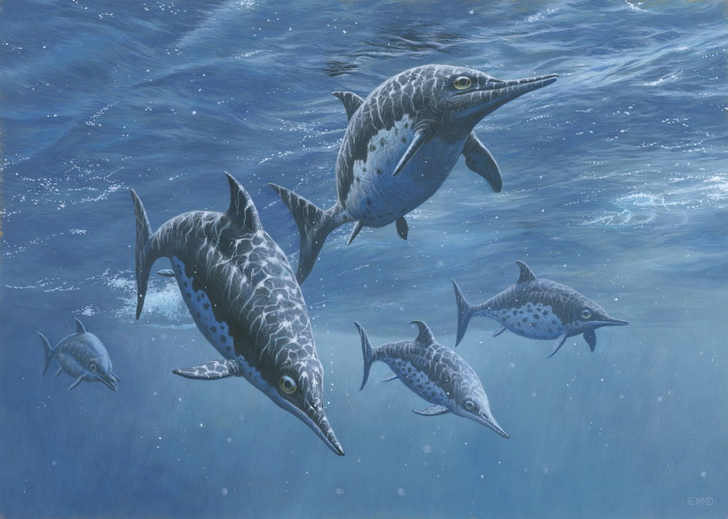 Ichthyosaurus by Esther van Hulsen