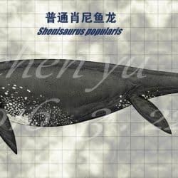 1487_shonisaurus_chen_yu