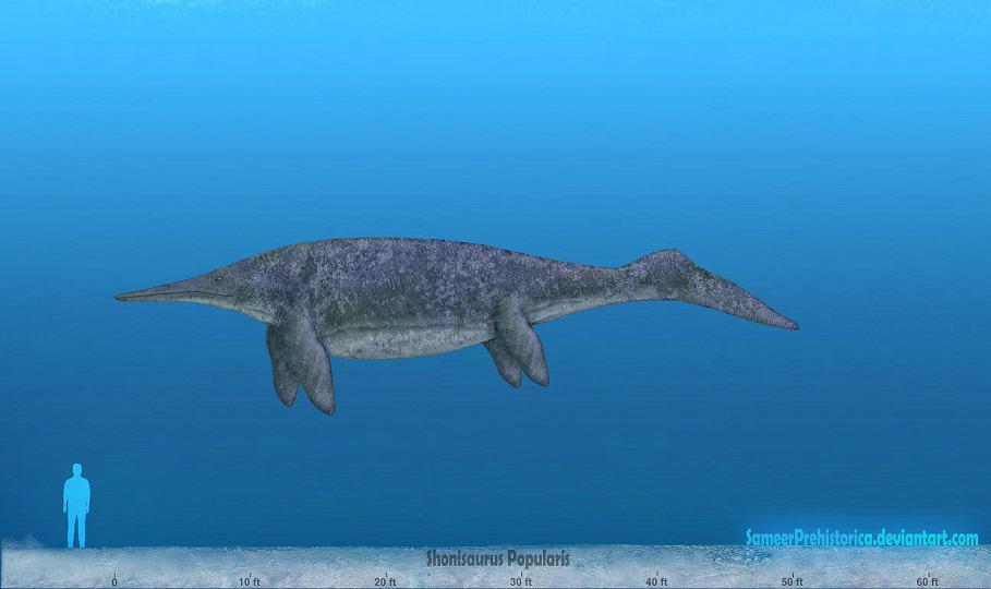 Shonisaurus by SameerPrehistorica