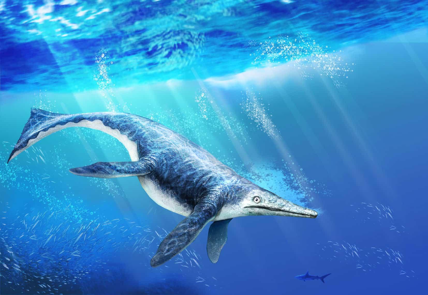 Shonisaurus by Daniele Rios Boleeiro