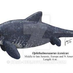 1503_ophthalmosaurus_gabriel