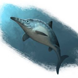 1505_ophthalmosaurus_raul_a_ramos